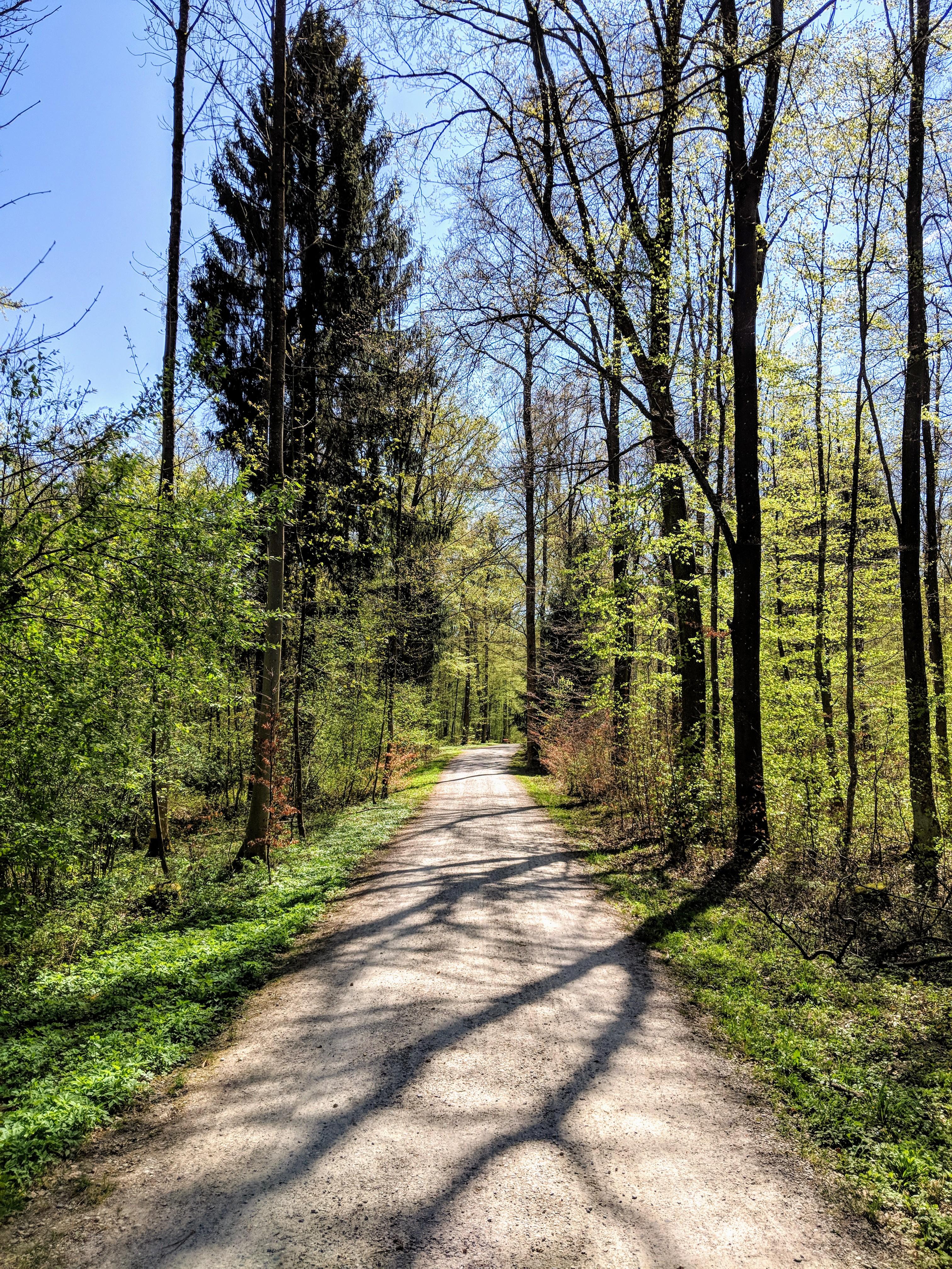 Running route in Zurich - In The Forrest