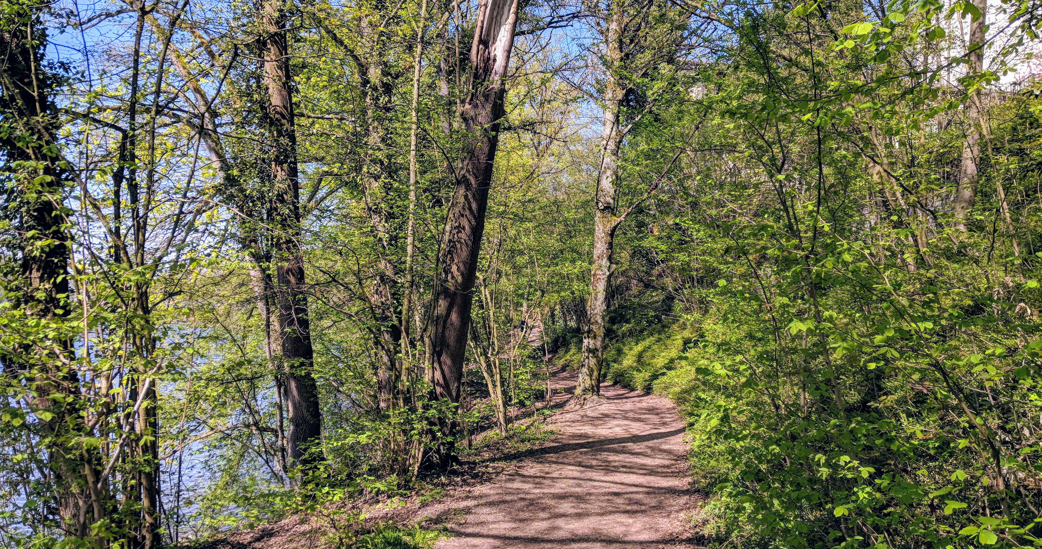 Running route in Zurich - Single Trail Along Limmat