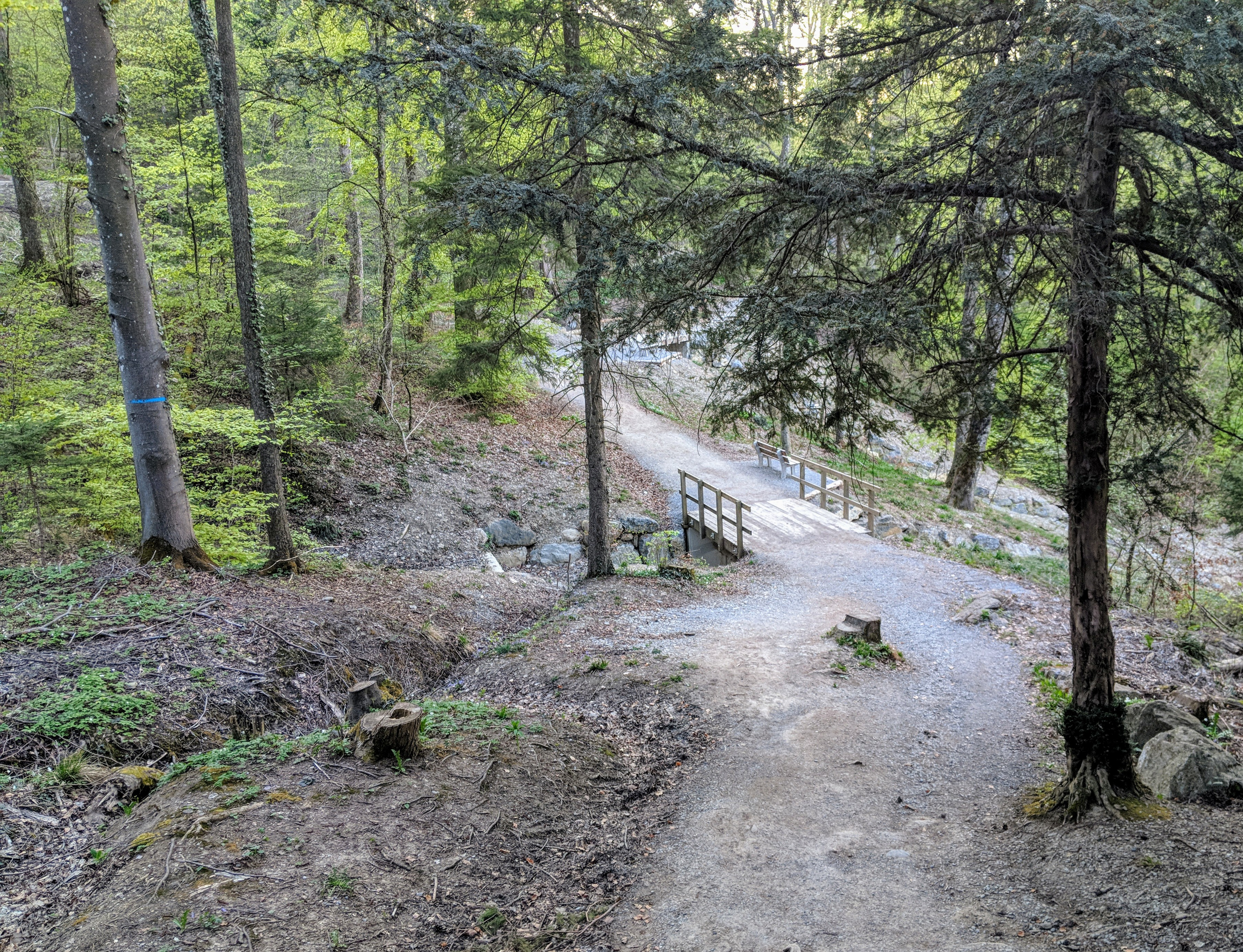 Running route in Zurich - Forrest2